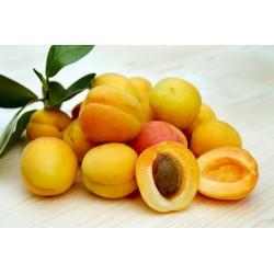 confiture artisanale abricot